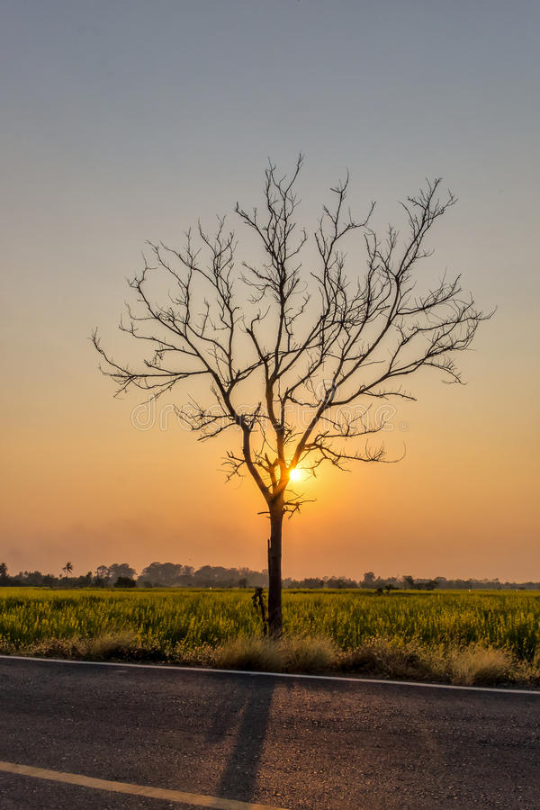 Silhouette Leafless tree at sunset with orange sky in background. Halloween concept stock image