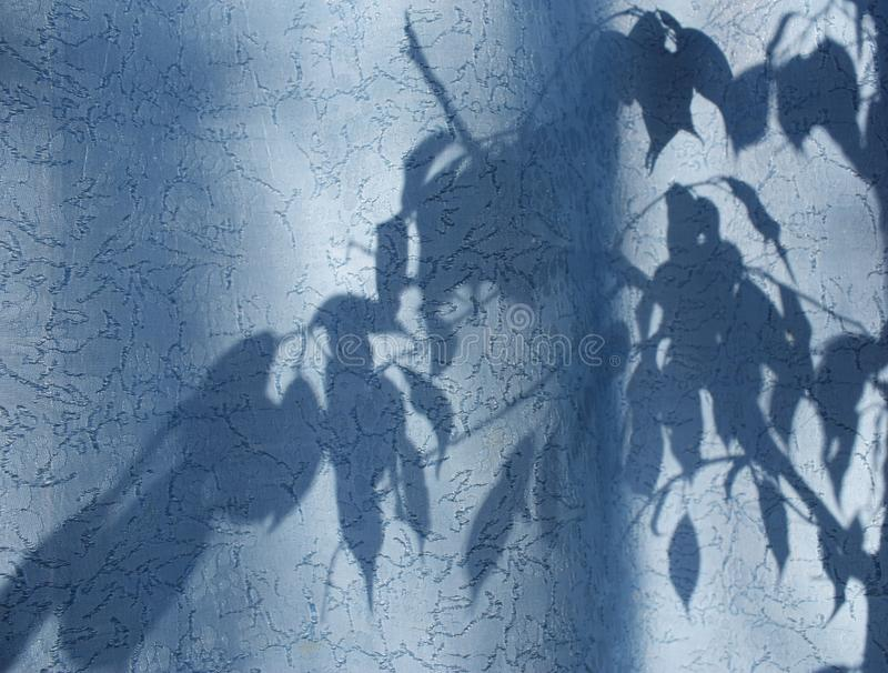 silhouette of leaves and branches on a blue curtain, curtains or tulle on the background of the sun stock photography