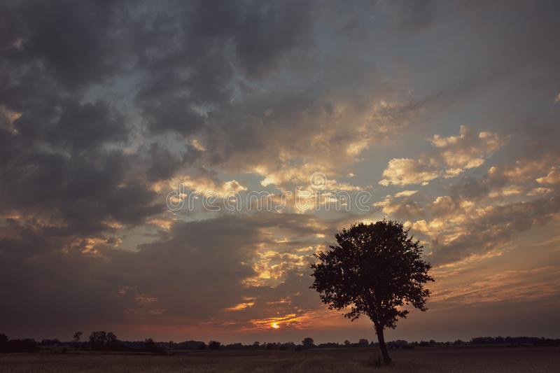 Silhouette of a lone tree and clouds during sunset royalty free stock photo