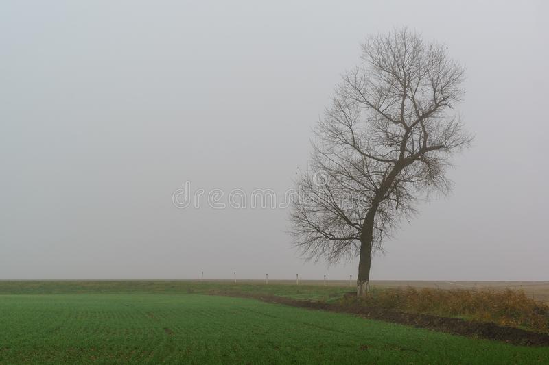 A silhouette of a lone tree in a dense grey fog over a field of green shoots. Cold autumn royalty free stock photography
