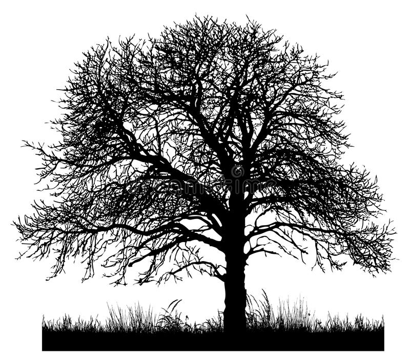 Silhouette of a lone tree vector illustration