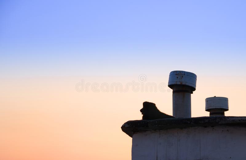 Silhouette of a lonely stray dog lying on the roof at sunset background stock image