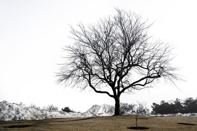 Silhouette of lonely tree royalty free stock photos