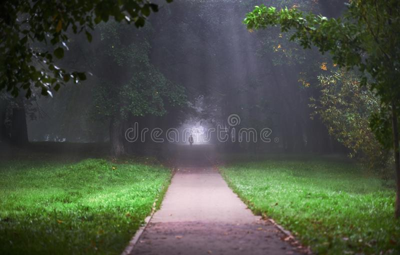 Silhouette of a man in the Park in the fog stock images