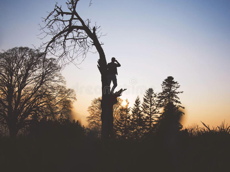 Silhouette of man standing in tree at sunset royalty free stock photos