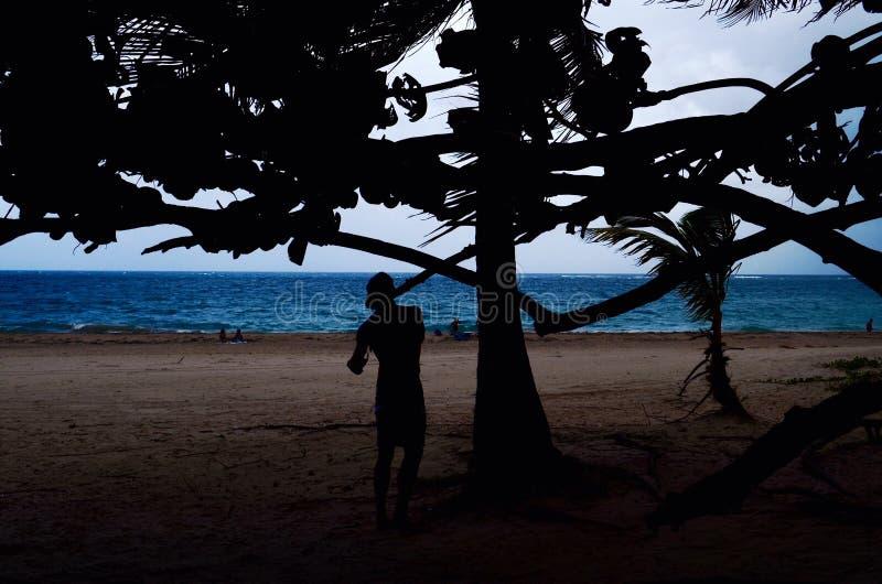 Silhouette Of Man Beside Tree Near Seashore royalty free stock image
