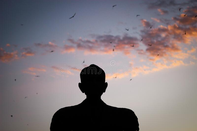 Silhouette of a Man Watching Birds Gliding on the Sky royalty free stock photography