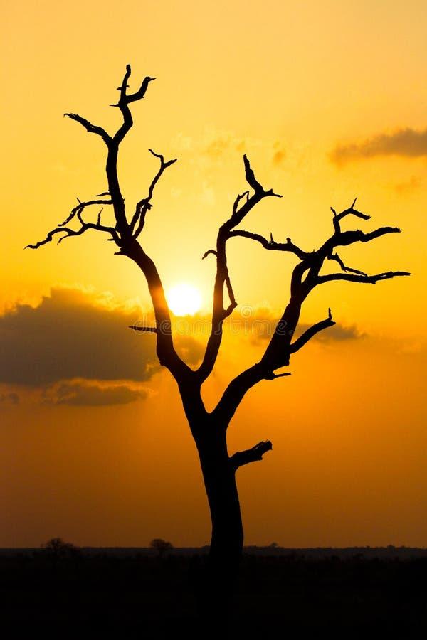 Silhouette morte d'arbre photos stock