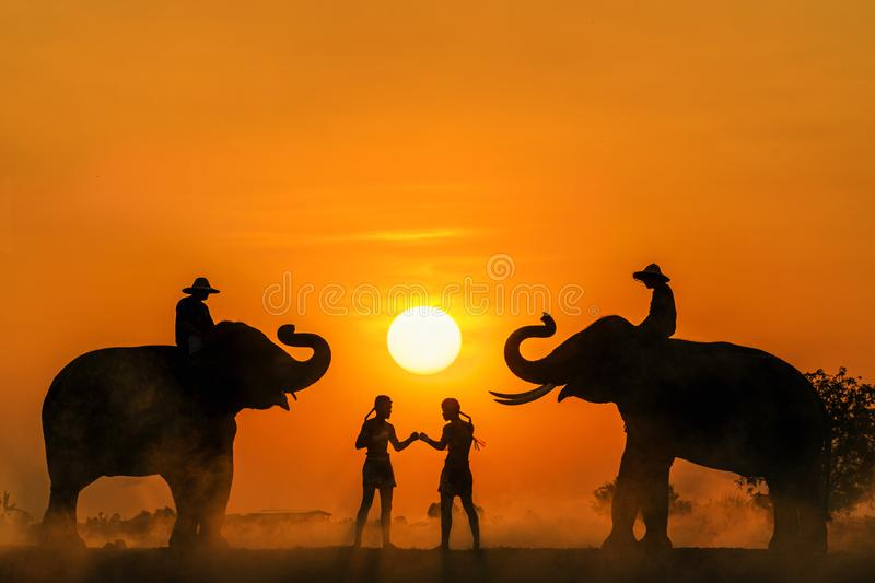Silhouette of a Muay Thai, Boxing training In the middle between two elephants. Thai boxing at the mounten, Boxing fighters stock image