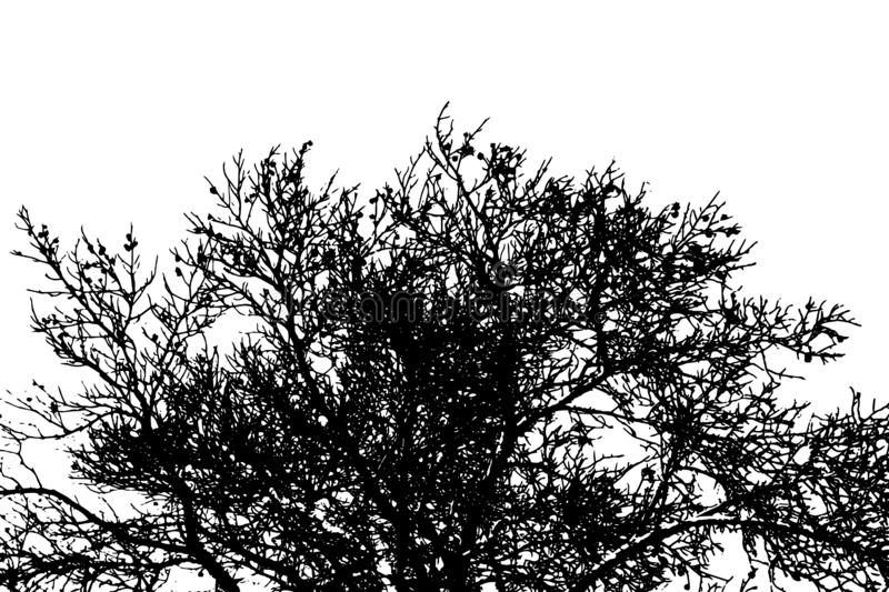 Silhouette of natural crown of dry bare branches of pine tree. Vector EPS10 stock illustration