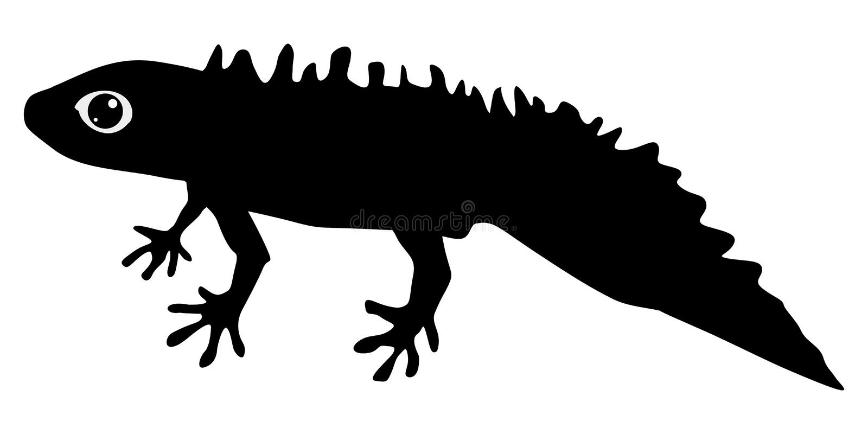 Silhouette of newt vector illustration