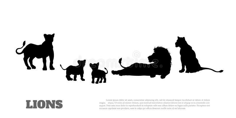Silhouette noire de fierté de lion sur le fond blanc Scène d'isolement de faune de la savane Paysage des animaux africains illustration libre de droits