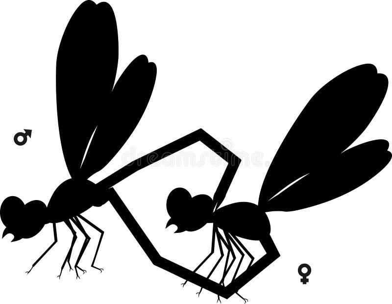 Silhouette noire des couples de accouplement des libellules sur le fond blanc illustration libre de droits