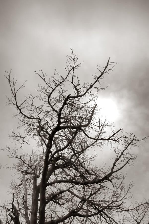Silhouette nue de branches d'arbre mort dans Sun doux photos stock