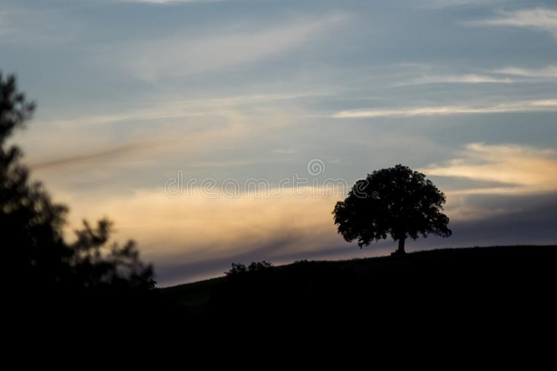 Silhouette of an oak on a hill at sunset stock images