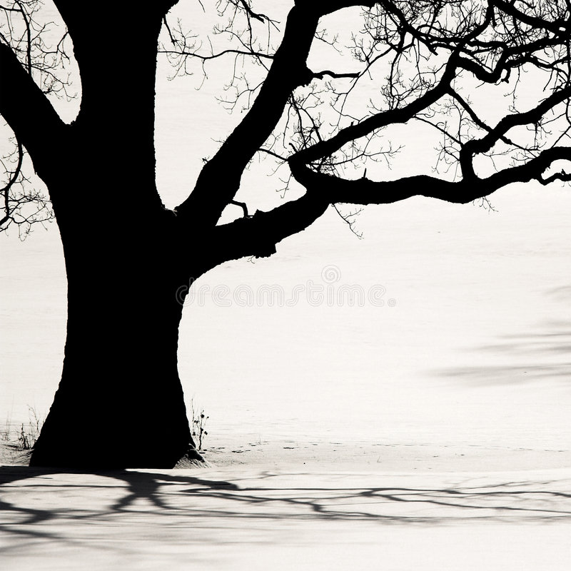 Free Silhouette Of An Old Tree In The Winter Stock Image - 5991531