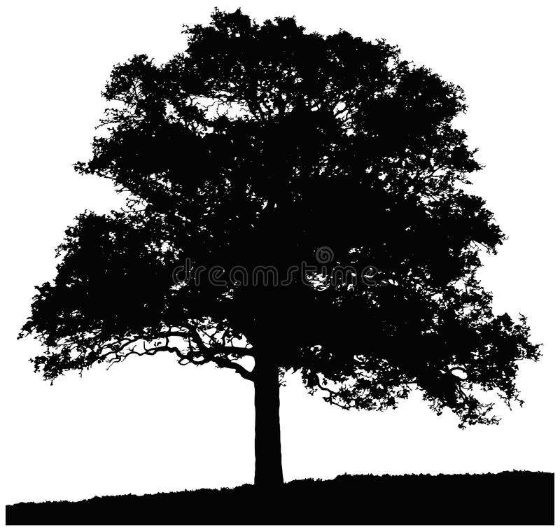 Free Silhouette Of Oak Tree Royalty Free Stock Photography - 44501147