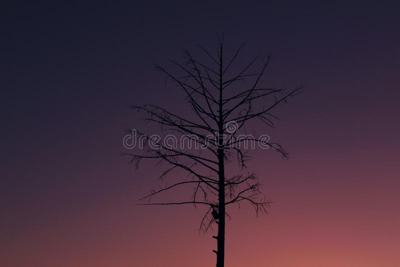 Silhouette of an old pine tree at beautiful sunset background. stock photography