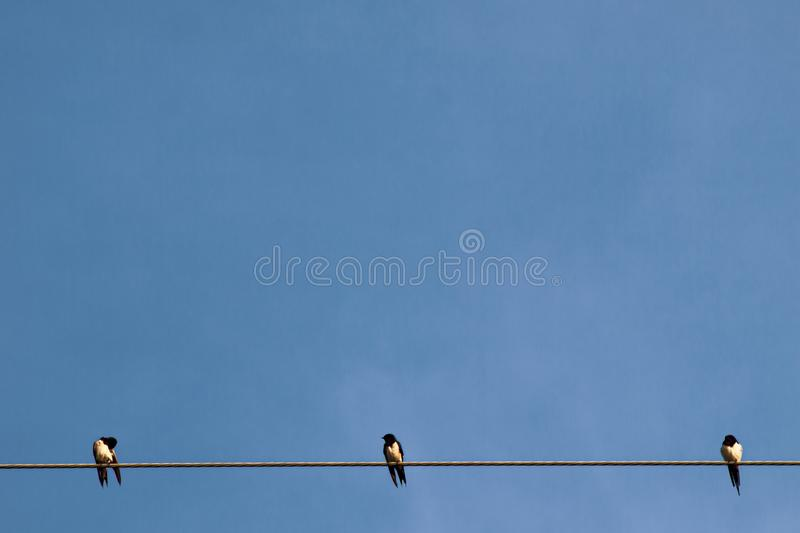 Silhouette a pair or couple of birds on electricity power lines. Clear sky in sunrise or sunset lighting background royalty free stock photos