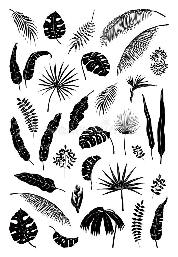 Silhouette palm leaves. Black jungle plants, summer foliage isolated elements exotic floral branches. Vector monstera vector illustration