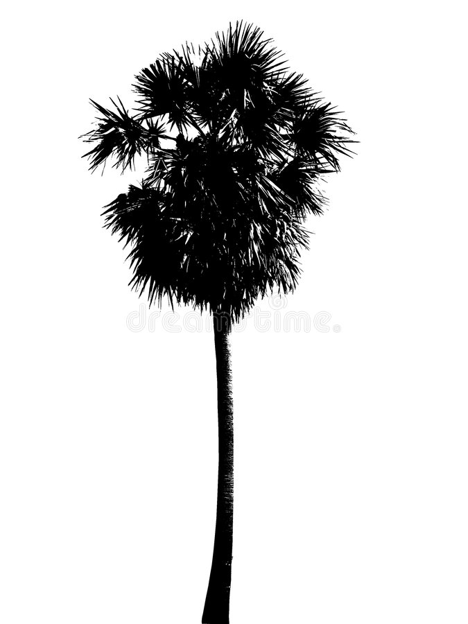 silhouette Palm tree royalty free stock photos
