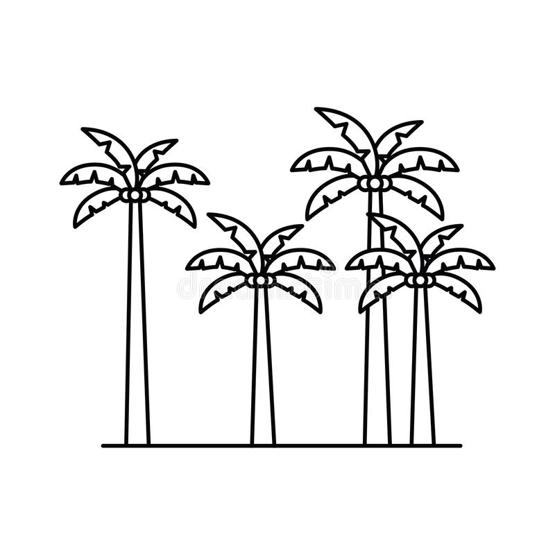 Silhouette of palm tree with coconut in white background. Vector illustration design stock illustration