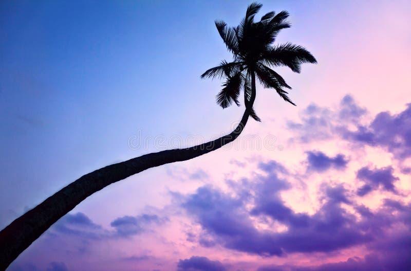 Silhouette of Palm tree at purple sky stock photos