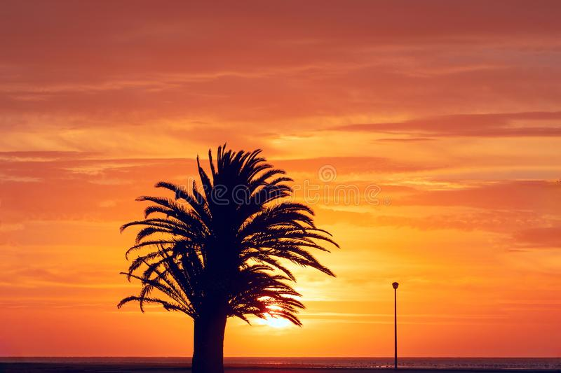 Silhouette of palm tree and street lamp at beautiful bright sunset. Africa, Namibia royalty free stock image