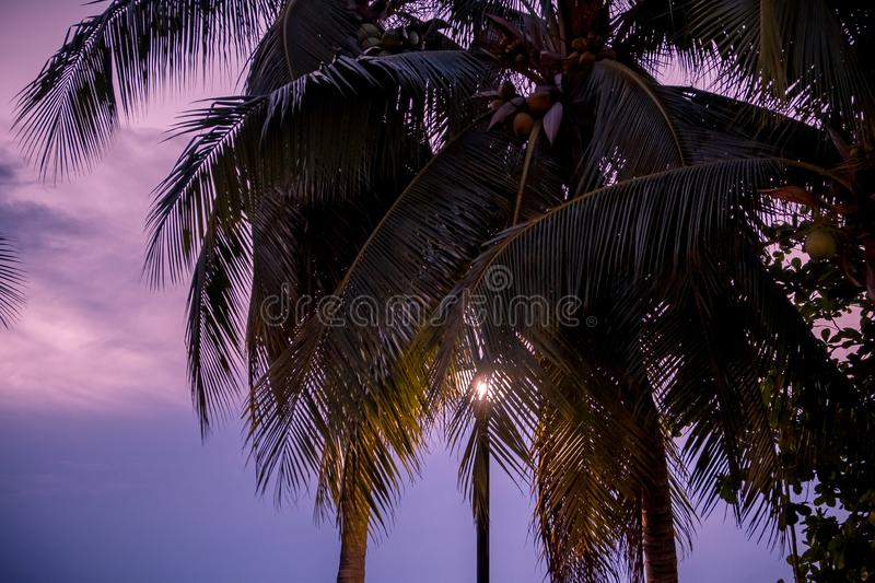 Silhouette palm tree with sunset background. Silhouette of single palm tree with background of sunset sky. royalty free stock image