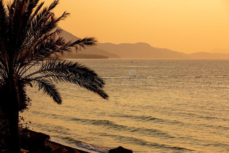 Silhouette of palm tree during sunset. In Kusadasi, Turkey stock photography