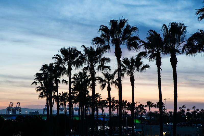 Silhouette palm trees on the beach at sunset. California, los, angeles, orange, county, la, sand, sandy, coast, surf, water, coastal, ocean, salty, wet, colors stock photography