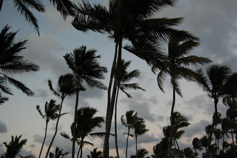 Silhouette palm trees. In a cloudy sky stock photos