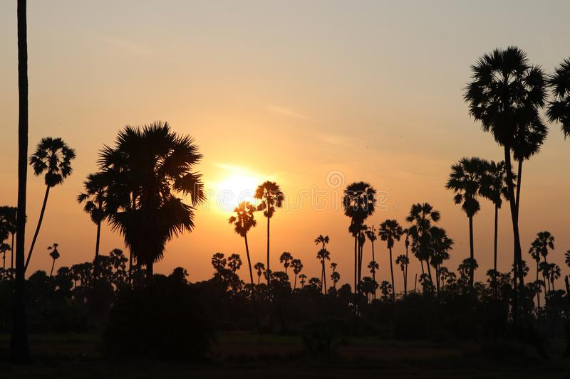 Silhouette palm trees and landscape of rice fields filled on twilight time and sunrise orange sky royalty free stock image