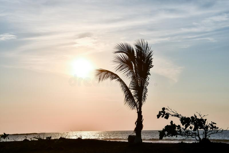 Silhouette of palm trees at sunset, photo as a background. Digital image stock photos