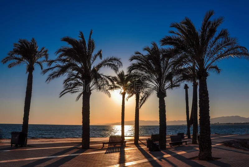 Silhouette of palm trees at sunset. Seafront of Salou, Spain. stock photo