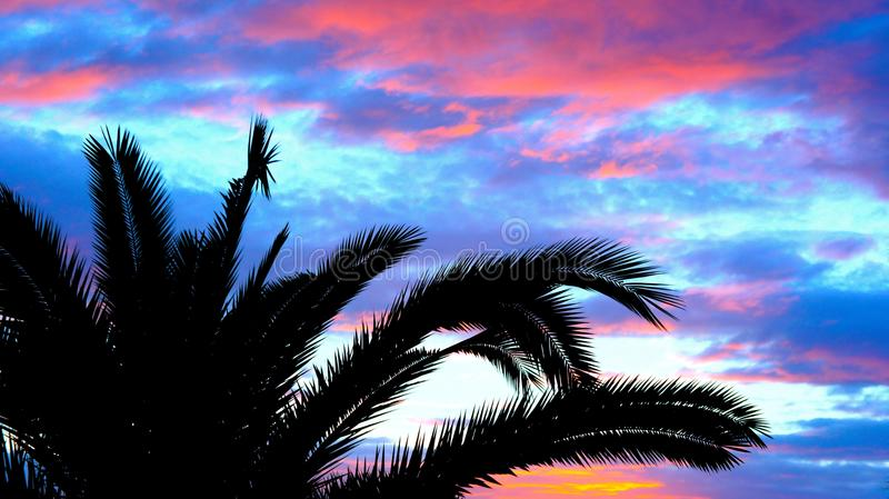 Silhouette of palm trees royalty free stock photo