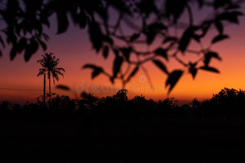 Silhouette Of Palm Trees At Tropical Sunset On Bali Island. Free Public Domain Cc0 Image