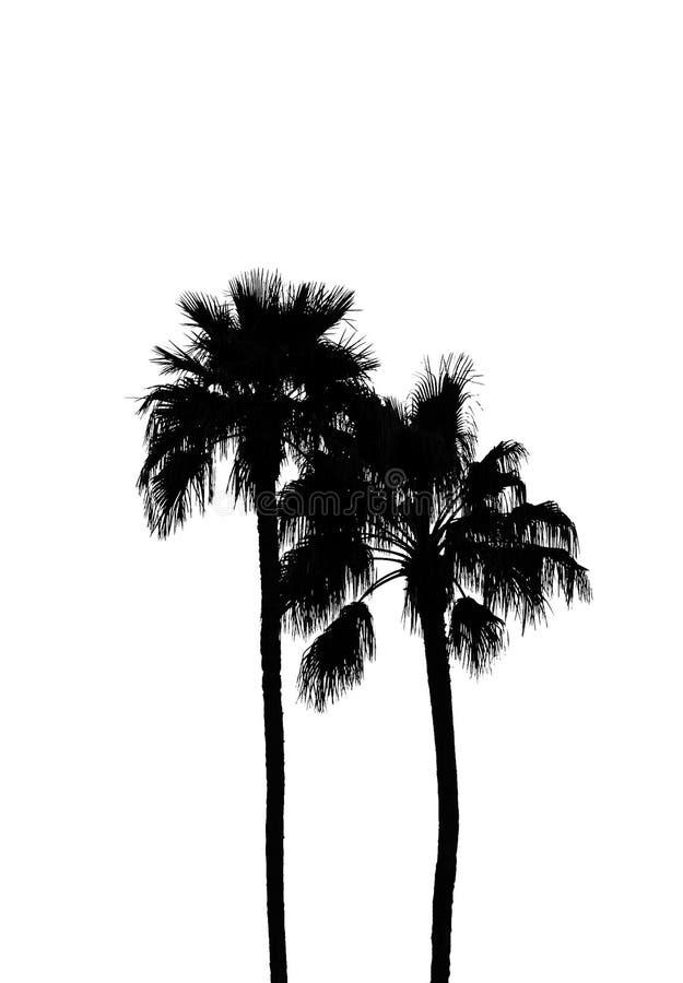 Silhouette of palms royalty free stock photos
