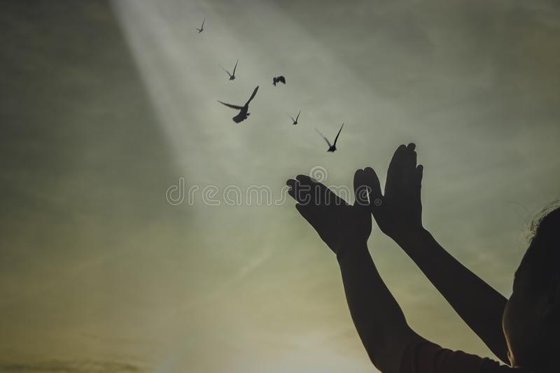 Silhouette people making hand as bird and release birds to be freedom. And free royalty free stock photos
