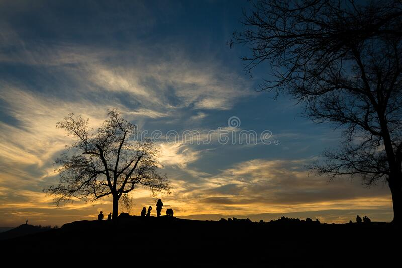 Silhouette of Person Near Bare Tree at Sunset stock photos