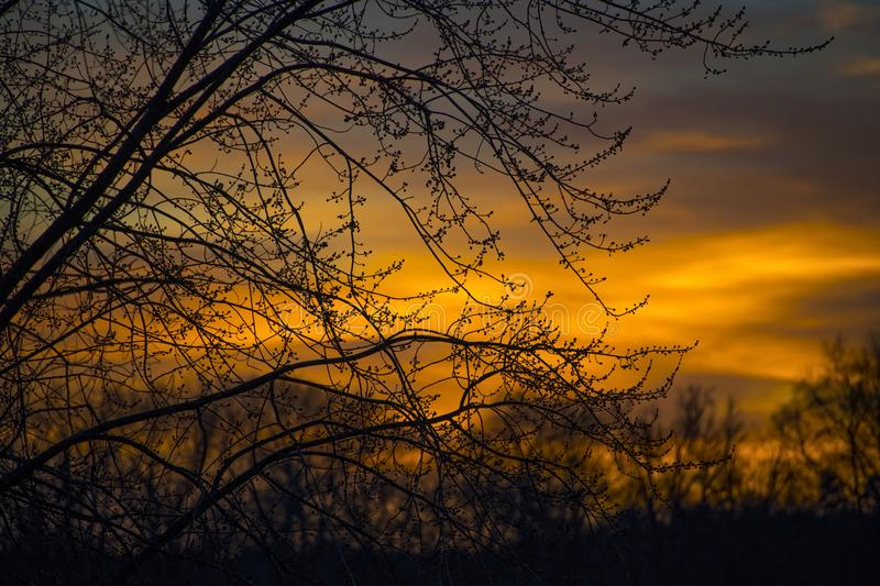 Silhouette Photo of Branches of Tree During Dusk stock image