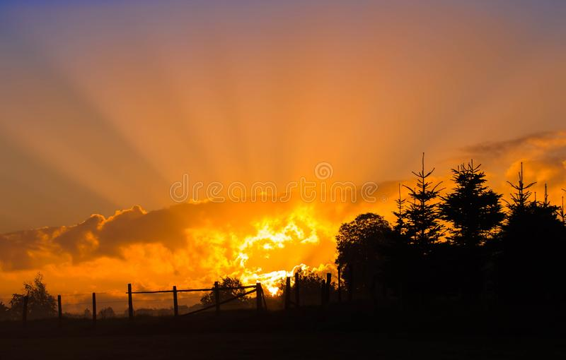Silhouette Photography of Tree during Sunset royalty free stock photos