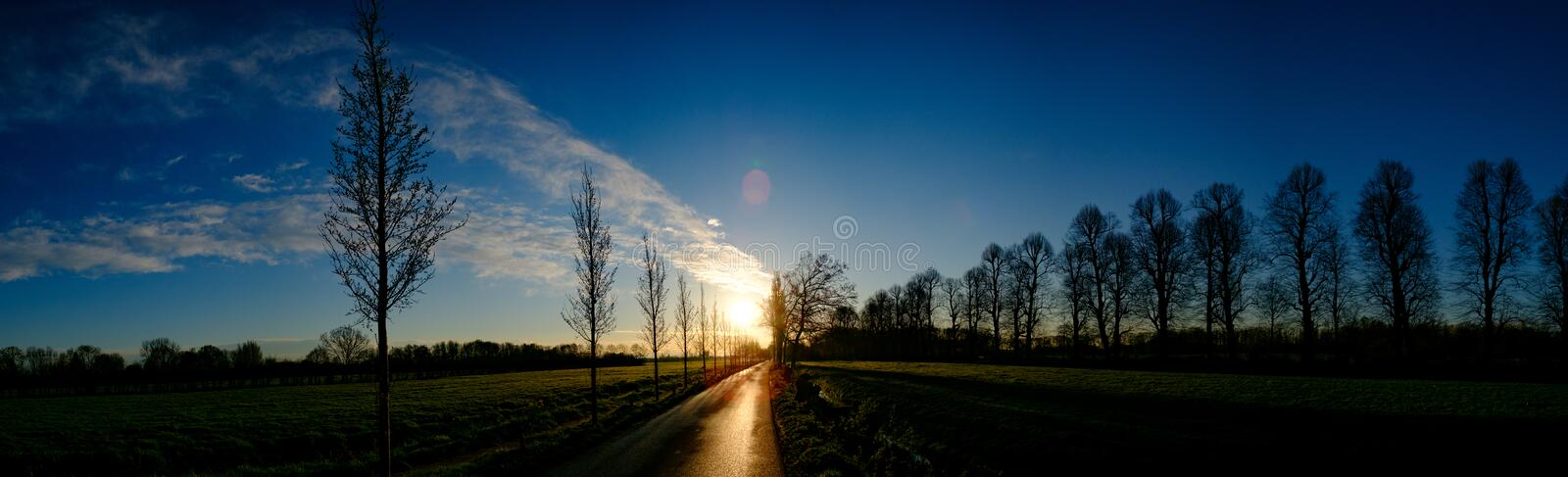 Silhouette of Piled Planted Trees on Shore royalty free stock photo