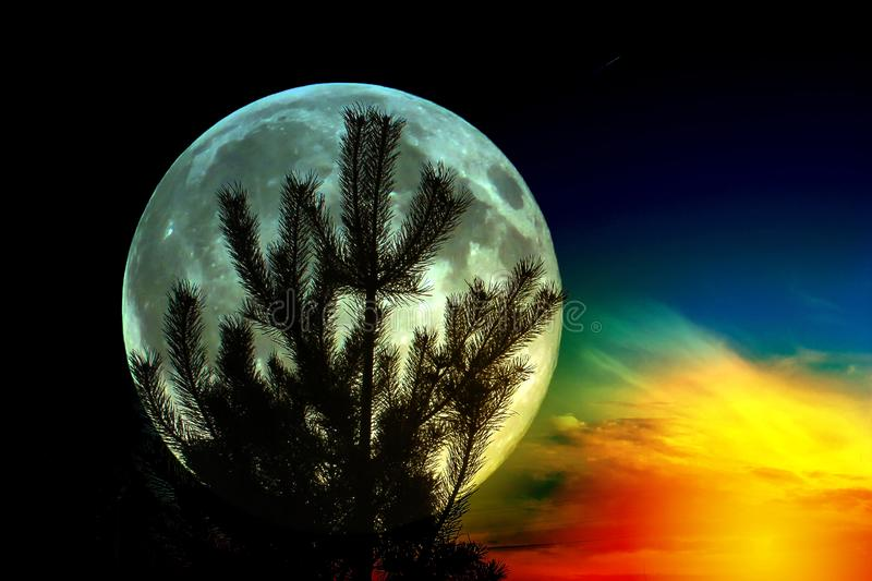 Silhouette of pine on the background of the full moon. Fantastic background stock photos