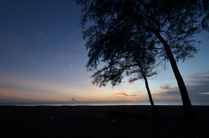Silhouette of pine tree during blue hour. Silhouette of pine tree during blue hour, taken at kelantan, malaysia stock photos