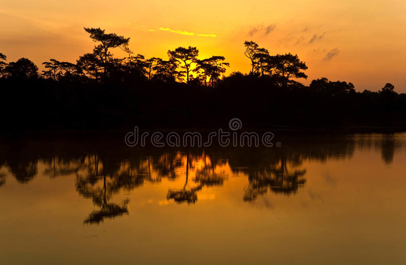 Silhouette Pine Tree Royalty Free Stock Photo