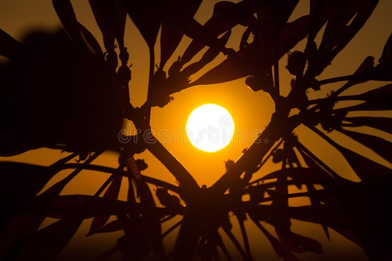 Silhouette of a plant at sunset having shape of a heart stock photography