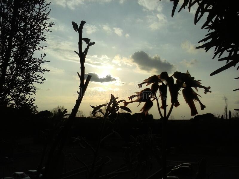 Silhouette Of Plants At Sunset Free Public Domain Cc0 Image