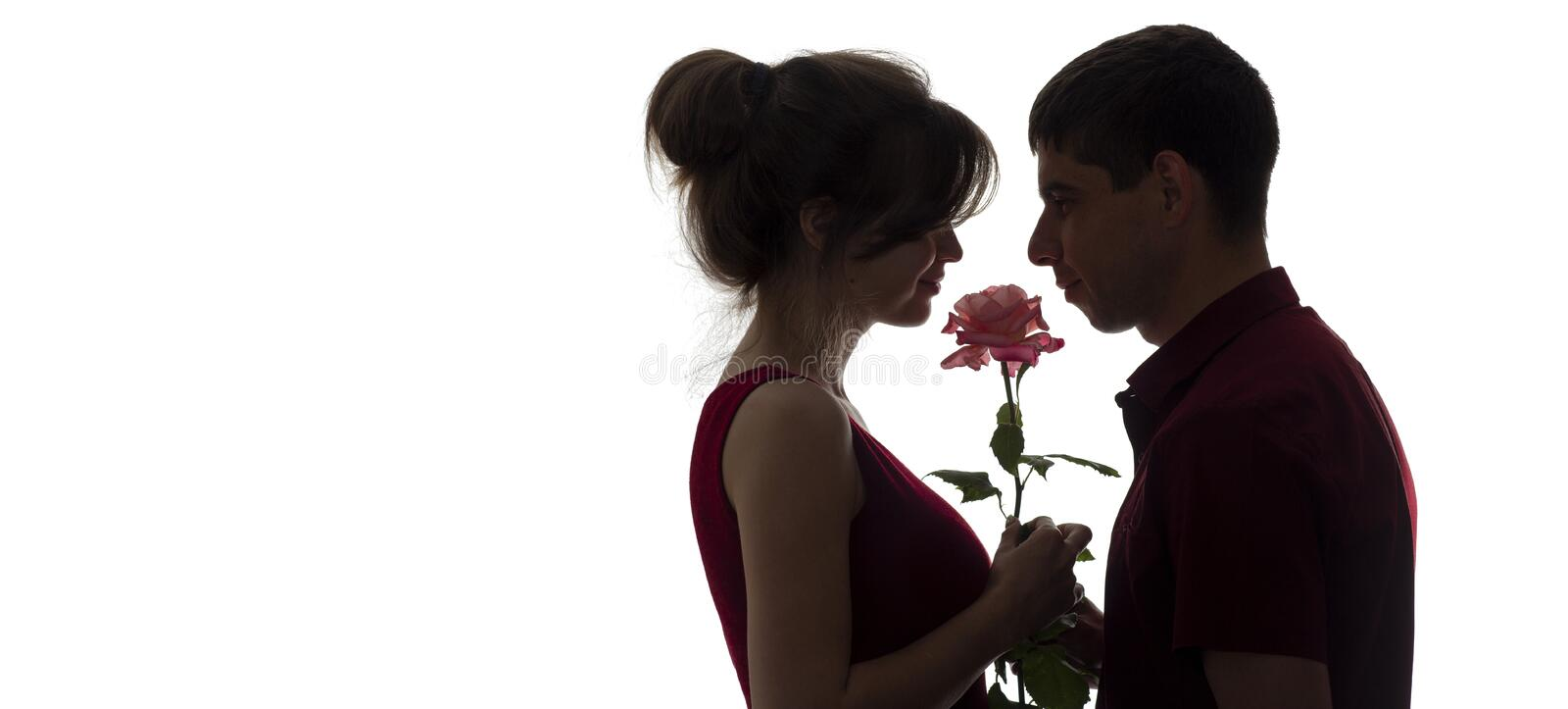 Silhouette profile of a young couple in love on white isolated background, man giving a woman a rose flower, concept love and stock image