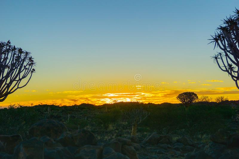 Silhouette quiver tree landscape at sunset royalty free stock image